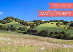 {Edible Cities} Marin County, California, with Neely Wang, Photographer and Designer