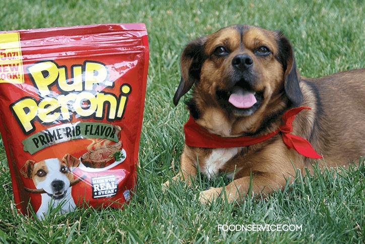A Dog Name Ubi And His Summer Time Fun