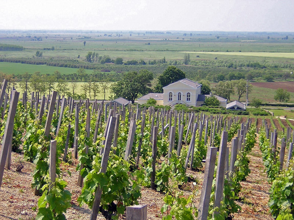 Tokaj - Disznókő Winery