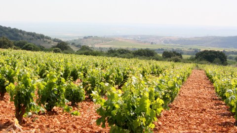 Grandes Vinos y Viñedos is the largest wine producer in the region.
