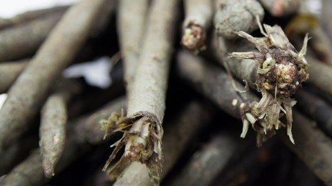 what is salsify