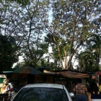 Wan Tan Mee stall under the tree@road behind Bulatan Pahang, KL