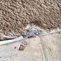 Carpet Repair in Greenville, SC - Foothills Carpet Care in ...