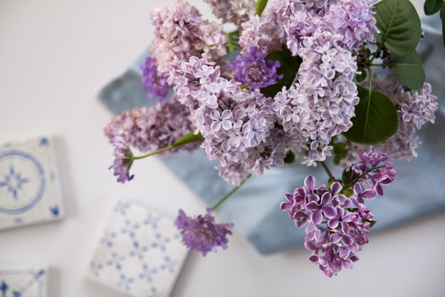 lilac for blog 13-1