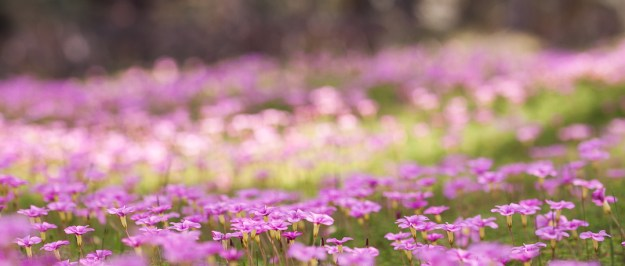 week 24-52 pink flowers 3-1