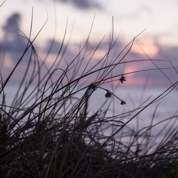 exmouth grasses-1