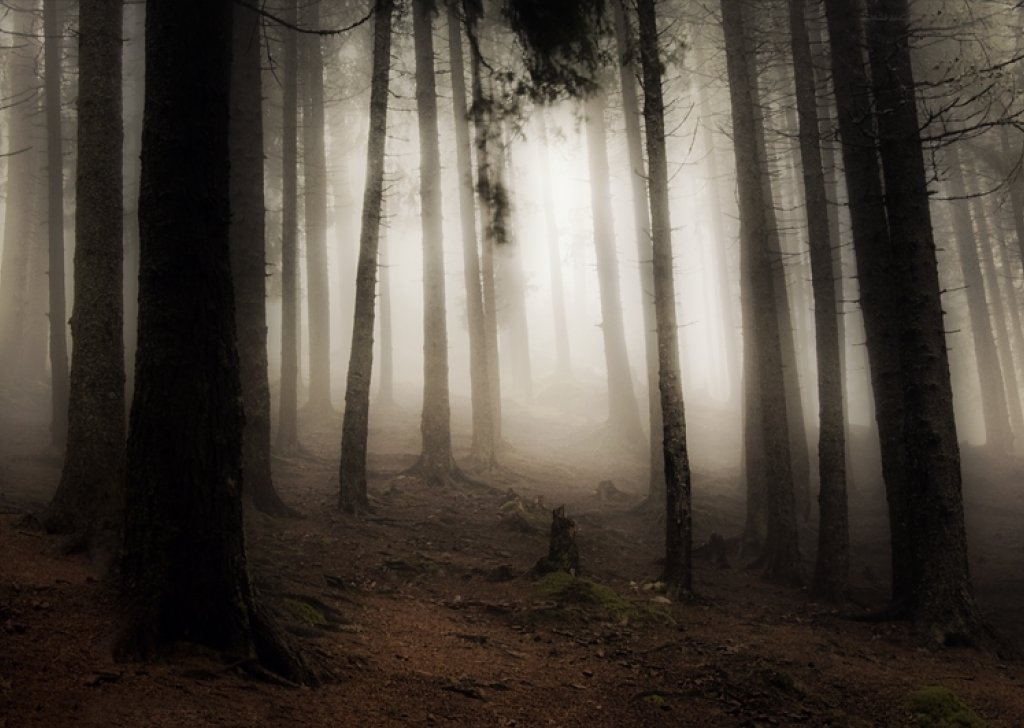 Girl Wallpaper Full Hd For Mobile Eerie Dark Forest Audio Atmosphere