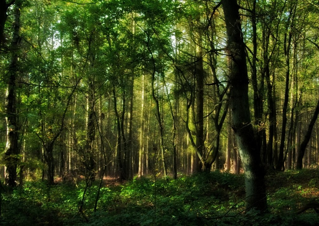 Free Animated Wallpaper Backgrounds A Wild Forest With Occasionally Eerie Atmosphere Audio
