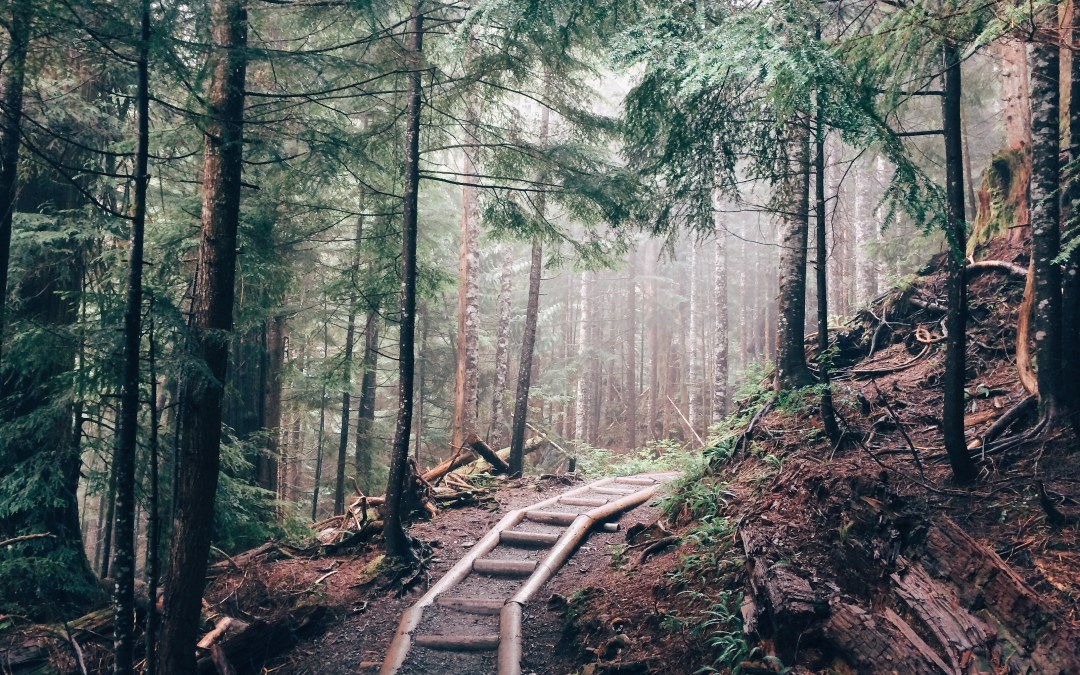 You Don't Need to Hike to Enjoy the Forest