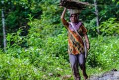 Reversing deforestation, restoring landscapes