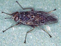 Photo: Alan R Walker Wikimedia(Own work) [CC BY-SA 3.0 (http://creativec