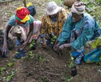 Gender relations in community forestry