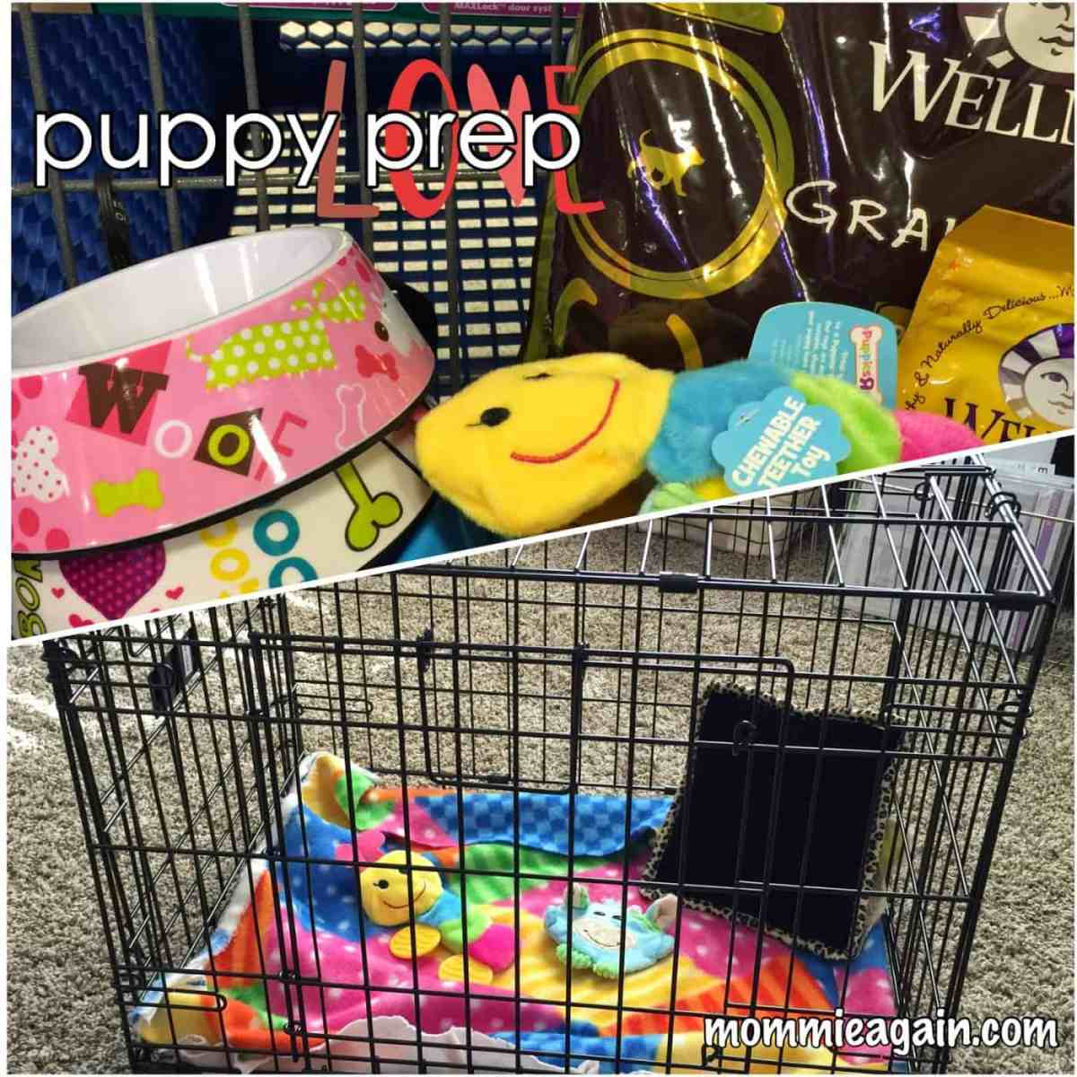 New Puppy Essentials: Preparing for A Puppy