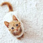 10 Benefits of Letting a Cat Grace You with His Presence