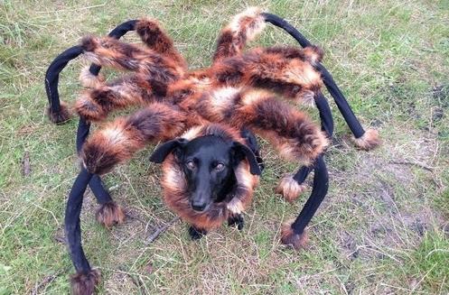 perro arana