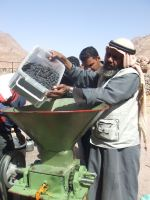 Seventy families now use the mo'assessa's oil press.