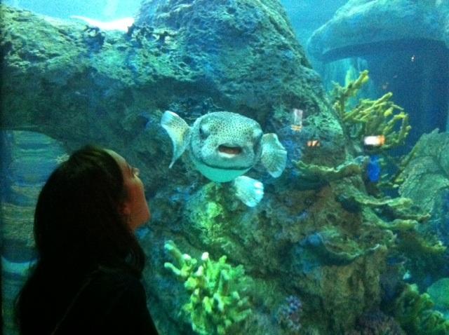 So I went to the Denver Aquarium .   Saltwaterfish Forum