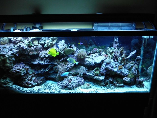 Good fish for 55 gallon tank 55 gallon just add water for Dustins fish tanks