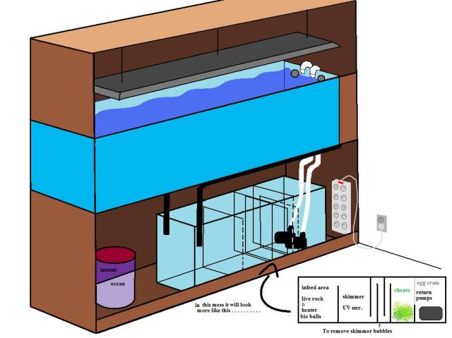 Saltwater fish tank pump setup layout of what the tank for Setting up a fish tank