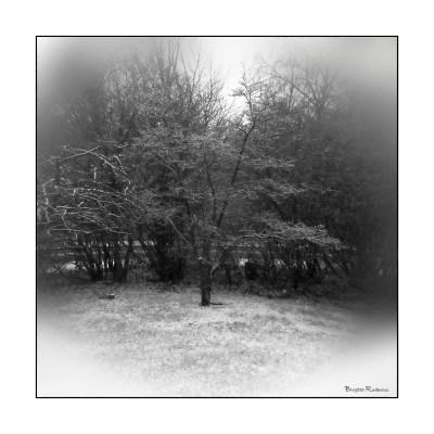 bw_20150124_wintertree