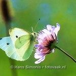 160830001_bij_vlinders-aan_de-vliet
