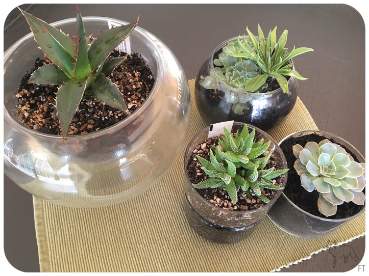 Caring For Succulents – Fox On An Island