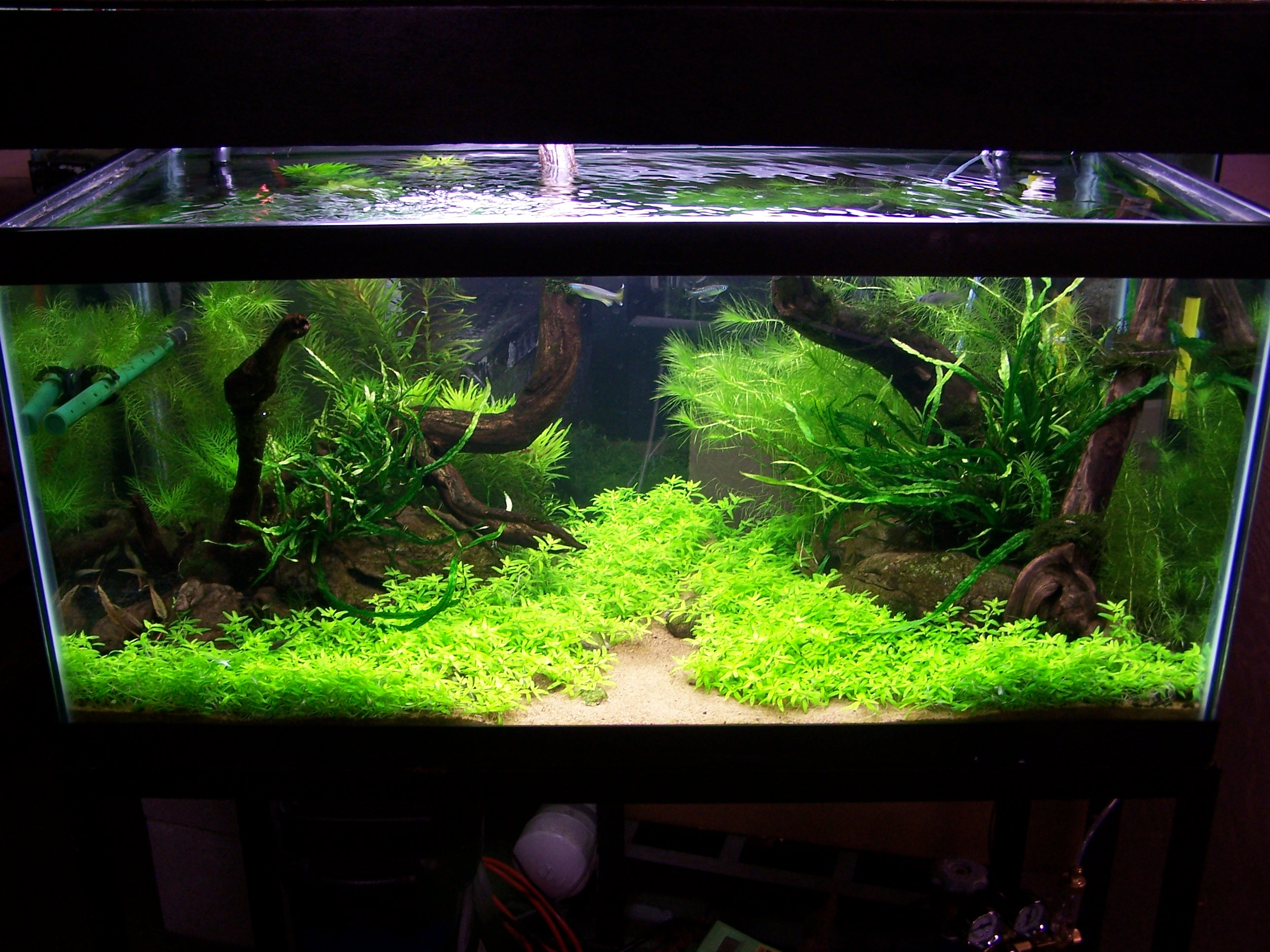 Aquascape Design If You Build A Freshwater Aquarium On January 1st When