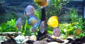 La filtration d?un aquarium pour le Discus