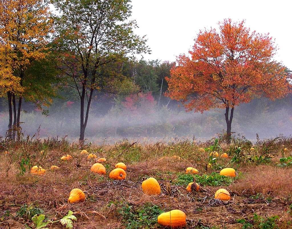 Beautiful Fall Paintings Wallpapers Photo Des Citrouilles Dans La Brume D Automne
