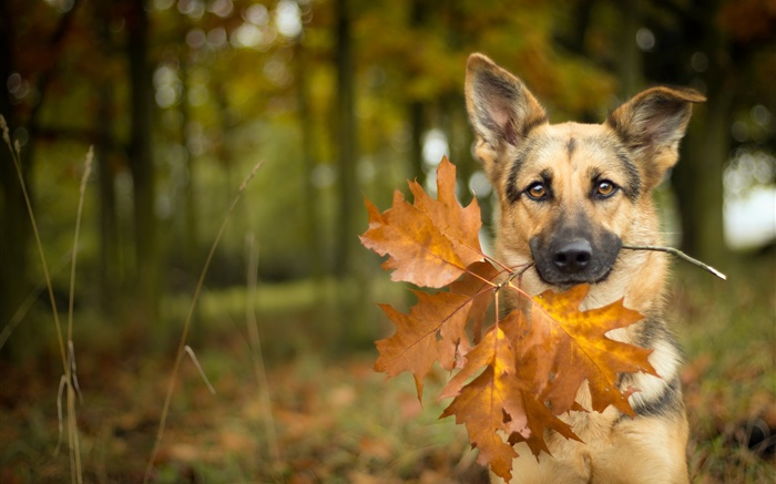 Cat In Fall Wallpaper Background Automne Chien Feuille Bokeh Hd Fonds D 233 Cran Animaux