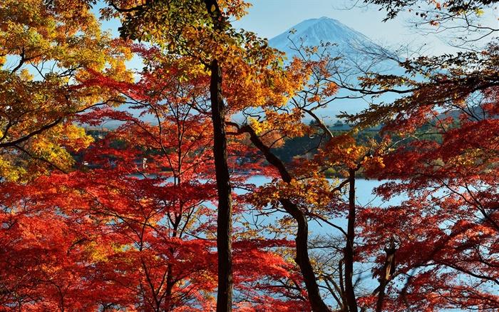 1920x1200 Fall Wallpaper Japon Paysage De Nature L Automne Les Arbres Les
