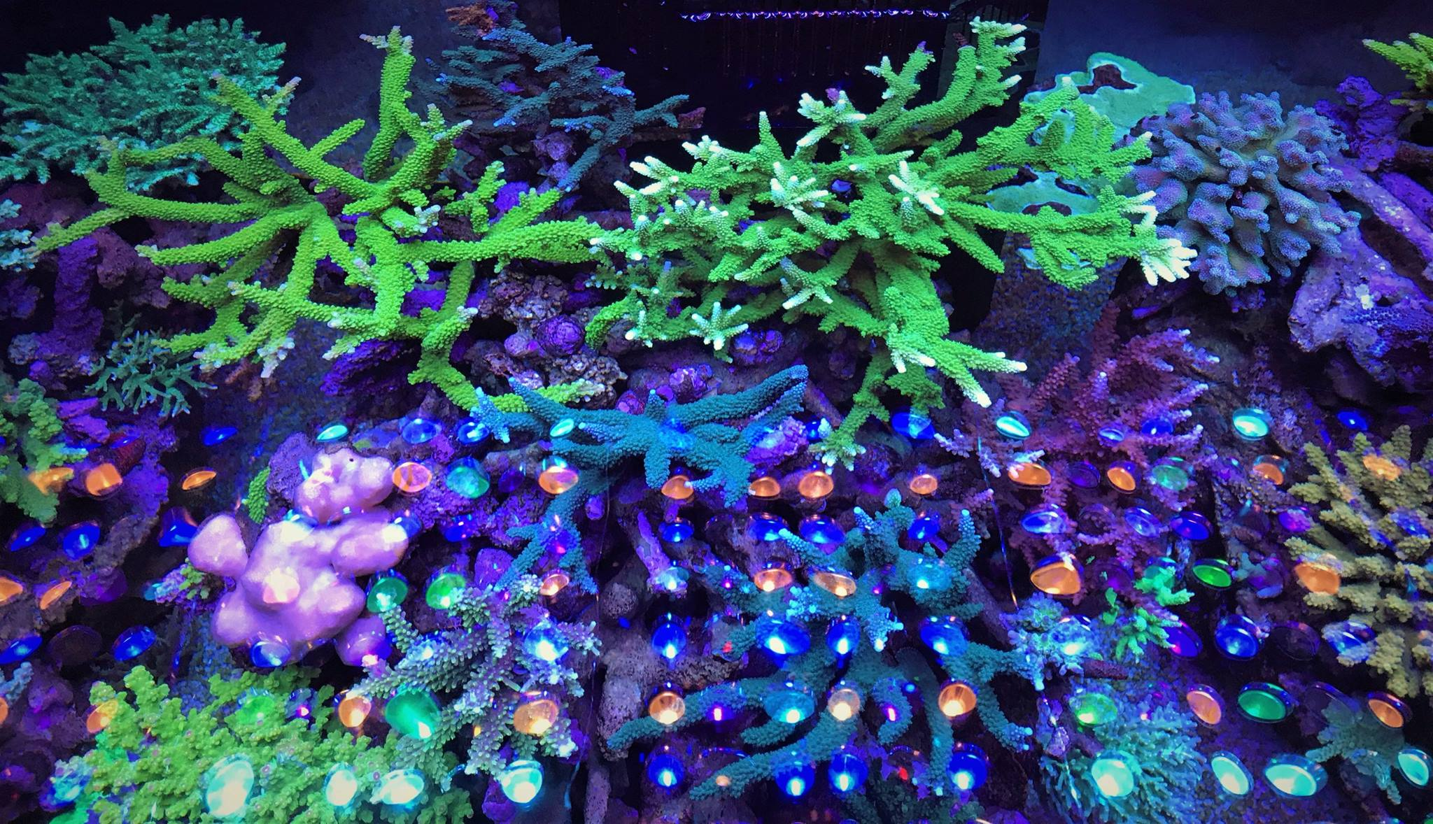 Eclairage Aquarium Led Avis Aquarium Led Lighting Photos Meilleurs Galerie D 39éclairage