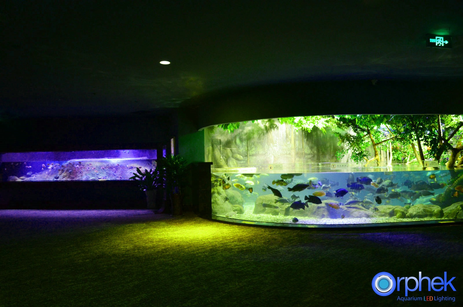 Amazon Eclairage Led Portfolio Orphek Aquarium éclairage Led