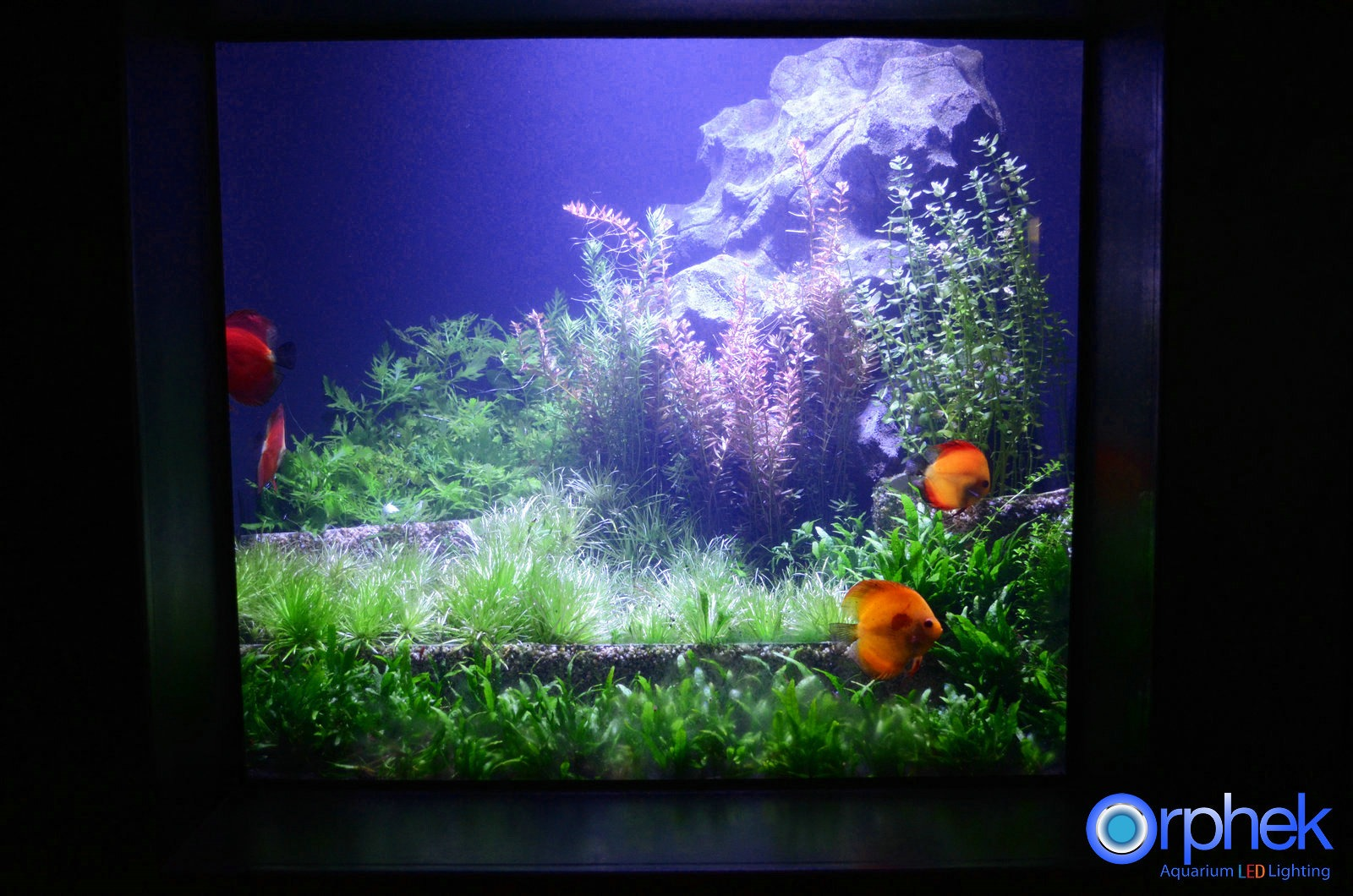 Amazon Eclairage Led Aquarium Led Lighting Photos Meilleurs Galerie D 39éclairage