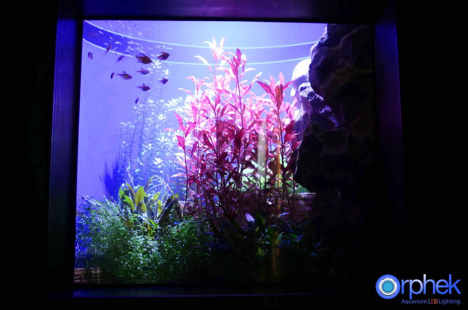 Amazon Eclairage Led Projet D 39éclairage Led D 39aquarium Public De Chengdu