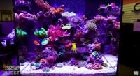 Aquarium LED Lighting Photos meilleurs Galerie d'clairage ...
