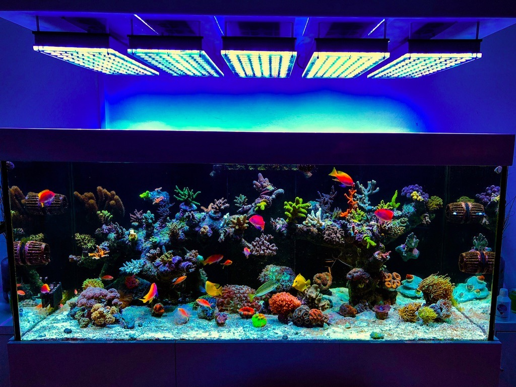 Eclairage Aquarium Led Avis Aquarium éclairage Led Orphek Aquarium éclairage Led