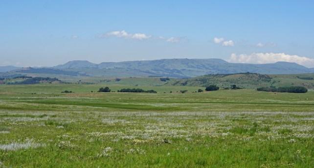 Grassland and Wetland landscape Northern KZN