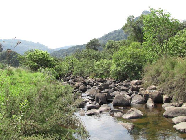 uMngeni River
