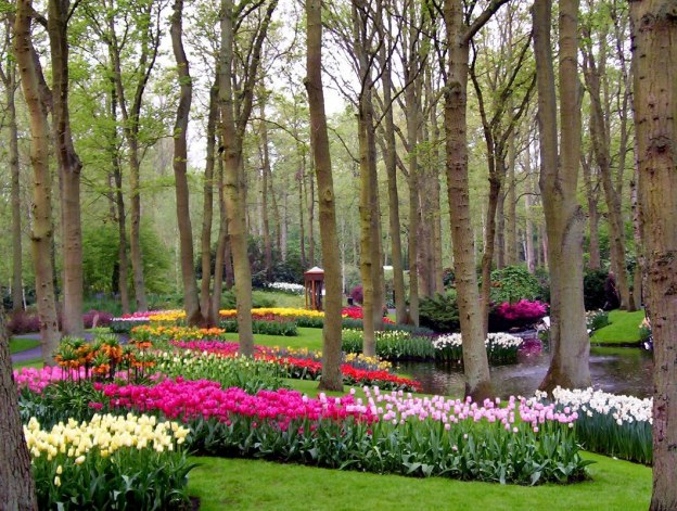 Various colored tulips growing in a forest at Keukenhof Gardens in the Netherlands.