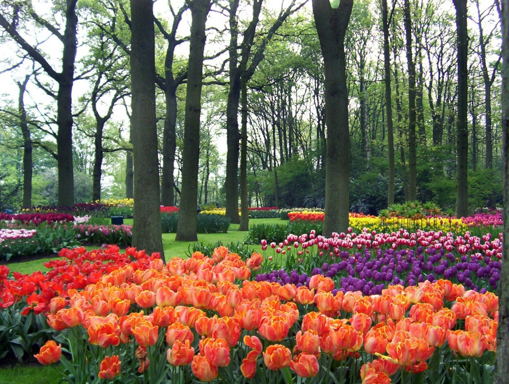 Keukenhof Gardens Our Visit To A Colorful World Of Tulips