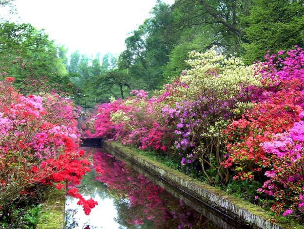Reflection pool surrounded by Azaleas at Keukenhof Gardens in the Netherlands.