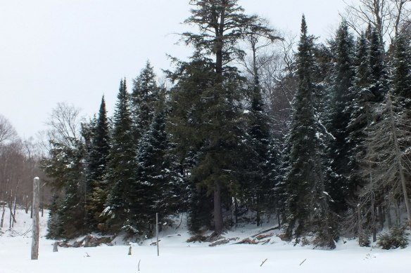 Snowy forest near Oxtongue Lake - Ontario