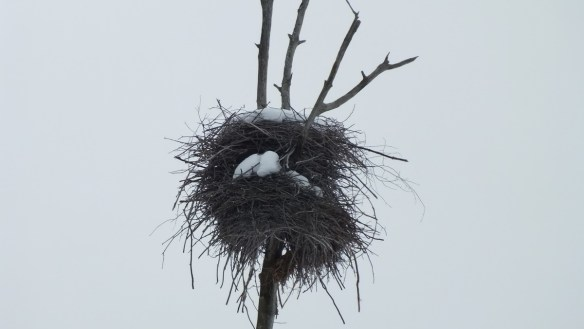 A herons nest covered in snow near Oxtongue Lake - Ontario