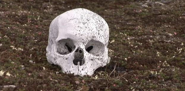 human skull on kekerten island - nunavut