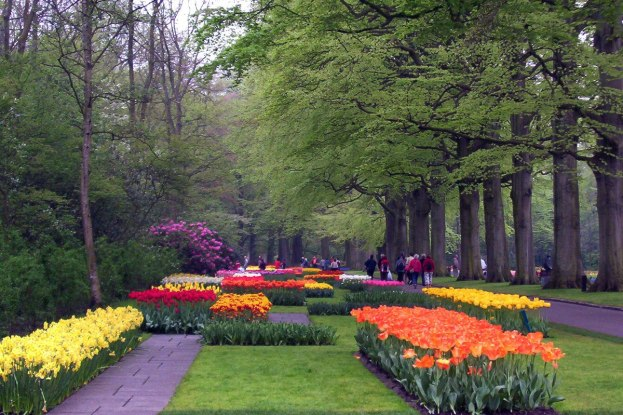 Spring tulip beds beside a walkway at Keukenhof Gardens in the Netherlands.