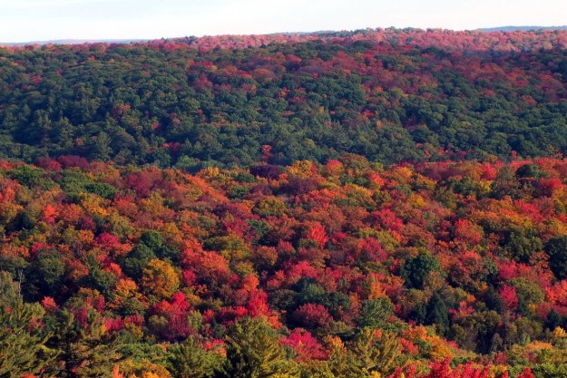 fall colors, dorset tower view, ontario, pic 2