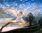John Cooksley Barn Owl