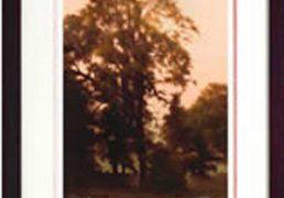 John Waterhouse Thistledown 2