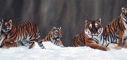 Jonathon Truss Snow Patrol